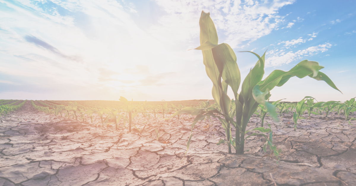 The US is in Drought and Agricultural Markets in Deficit